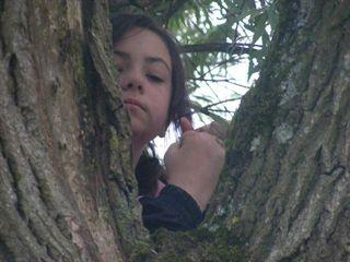 Kirsten tree