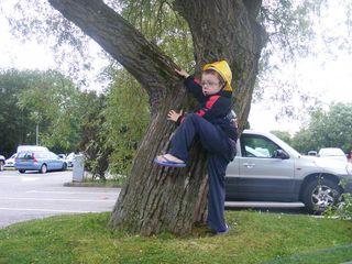 Charley tree